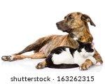 Stock photo large dog and cat lying together isolated on white background 163262315