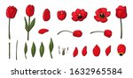 Red Tulips Set Vector That...