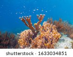 Caribbean coral reef off the coast of the island of Bonaire,elkhorn coral