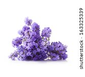 Stock photo bunch of lavender flowers isolated on white background 163325339