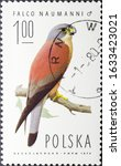 Small photo of MADRID, SPAIN - FEBRUARY 2, 2020. Vintage stamp printed in Poland shows lesser kestrel (Falco naumanni), a small falcon