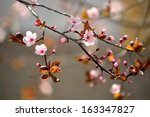 beautiful flowering japanese... | Shutterstock . vector #163347827
