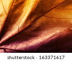 Close Up Of Colorful  Leaf...