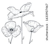 black and white poppies drawing ...   Shutterstock .eps vector #1633907467