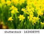 Flowerbed With Yellow Small...