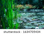Lilypads Filling The Top Of A...