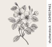 rose hip. wild rose. botanical... | Shutterstock .eps vector #1634819461