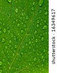 green leaf. | Shutterstock . vector #16349617