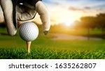 Hand Of Golfer Putting Golf...
