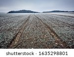 Agricultural Fiield With Littl...