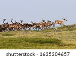 Fortymile Caribou Herd Boundary ...