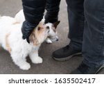 Small photo of Cute fluffy dog looks up as he is being stroked by a man outside on tarmac during a dog walk. A Jack Russell terrier is next to him also being fussed.