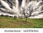 Bare Tree Landscape.