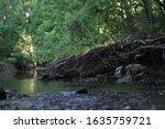 Creek in Elizabethtown Kentucky along a trail.