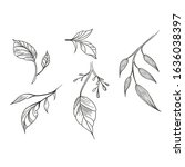 line leaf. sketch. element for... | Shutterstock . vector #1636038397