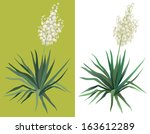 Flowering Green Plant Yucca...