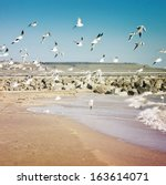 Group Of Seagulls On The Beach