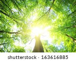 Green Forest  Background In A...