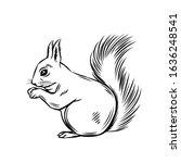 Squirrel Forest Animal. Wild...
