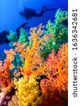 Small photo of Underwater colorful coral diving scene. Colorful underwater coral reef. Underwater coral reef view