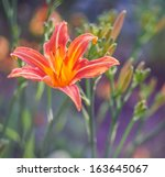 Red Day Lily In Garden