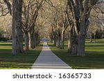 Small photo of Alleey with old American elm trees - the Oval at Colorado State University campus in early spring
