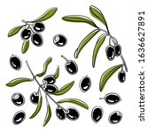 olives and olive branches with... | Shutterstock .eps vector #1636627891