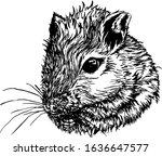 Portrait Of A Mouse. Mongolian...