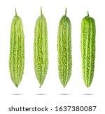 Bitter Melon  Balsam Pear ...