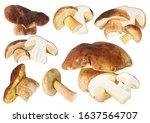 Boletus Edulis Mushroom...