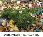 Autumn In The Forest. A Small...