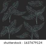tropical leaves design. banana... | Shutterstock . vector #1637679124