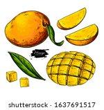 mango vector drawing. hand... | Shutterstock .eps vector #1637691517