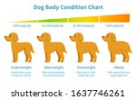 dog body condition chart. body... | Shutterstock .eps vector #1637746261