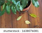 Overhead Photo Of Indoor Plant...