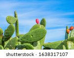 Prickly Pear Cactus And Blue...