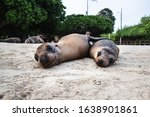 Two Sea Lions Chilling On The...
