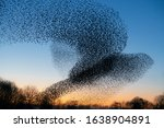 Beautiful large flock of...