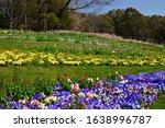 Various Flowers In Spring...