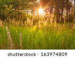 Stock photo sunlight through green forest summer time background 163974809