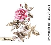 vector watercolor rose. vector... | Shutterstock .eps vector #163996535