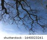 Barren Trees In Winter Time