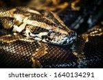 Reticulated Python ...