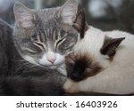 Stock photo two sleepy cats 16403926