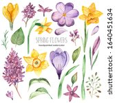 Spring Flowers Of Crocus  Lila...