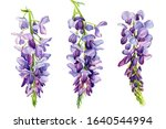Set Of Wisteria Flowers On An...