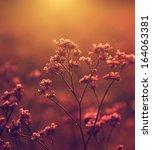 Vintage Flower Photo In Sunset