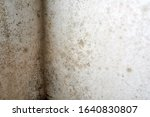 black mould and fungus on home... | Shutterstock . vector #1640830807