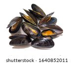 Cooked Blue Mussels   Isolated...
