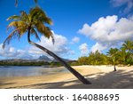 beautiful palm beach in... | Shutterstock . vector #164088695